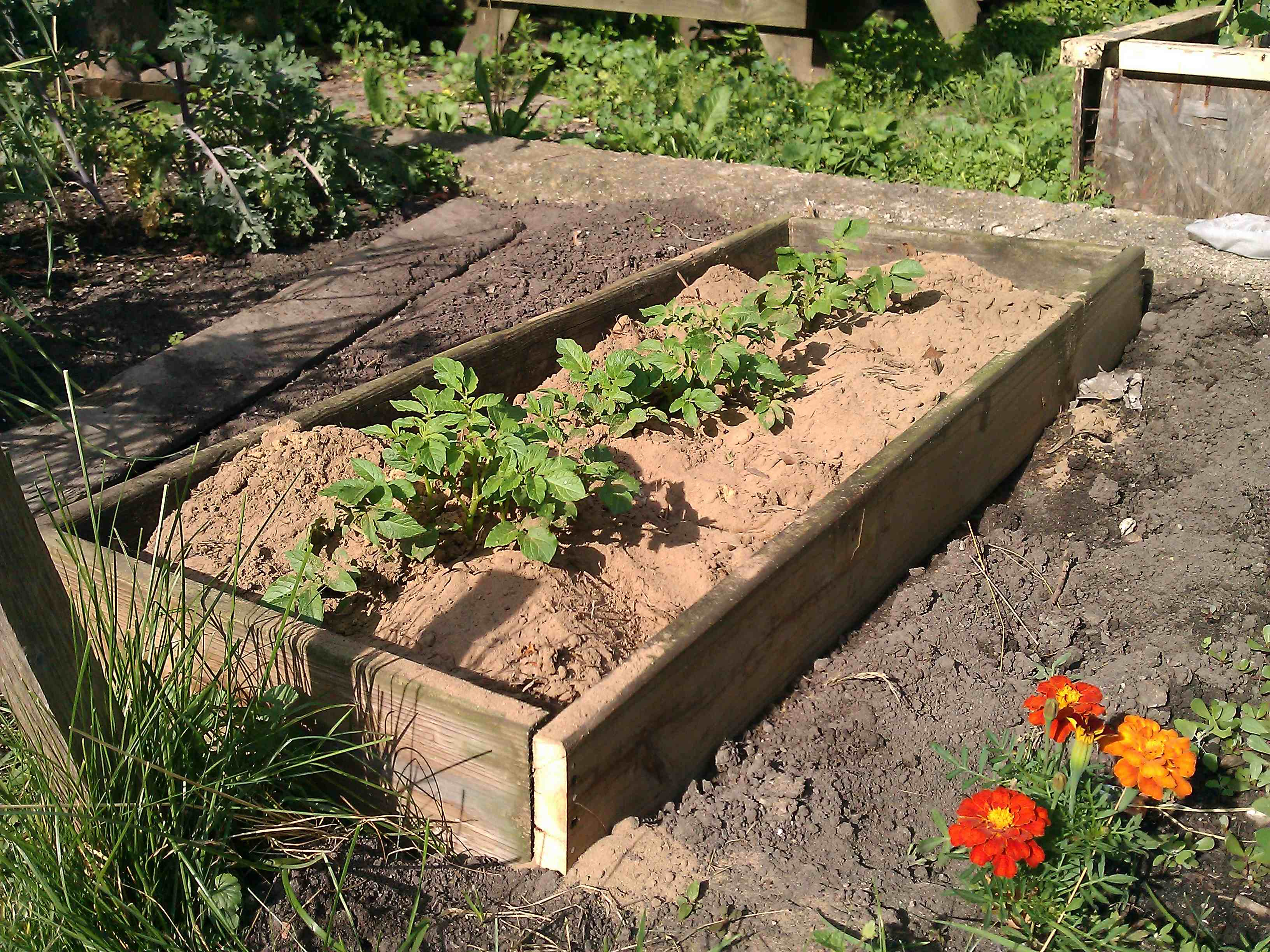 Gardening starting your own vegetable garden living for Starting a vegetable garden